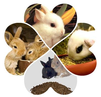 how to make rabbit pellets